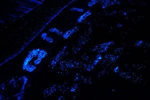 Bioluminescent Phytoplankton foot print