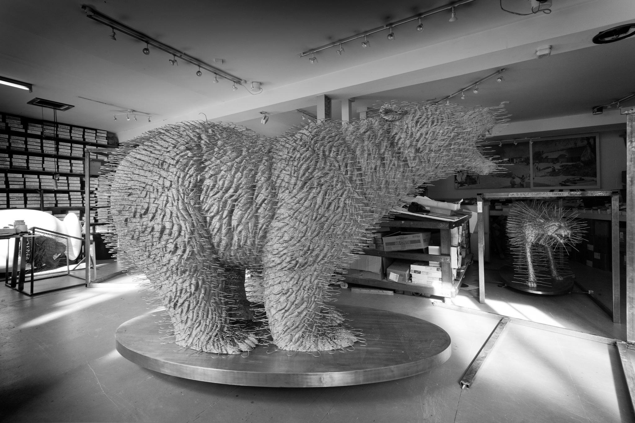 pola bear