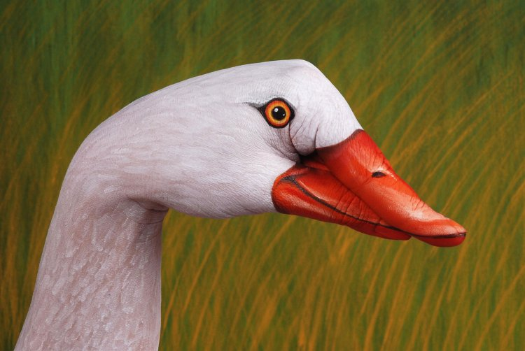 swan hand art